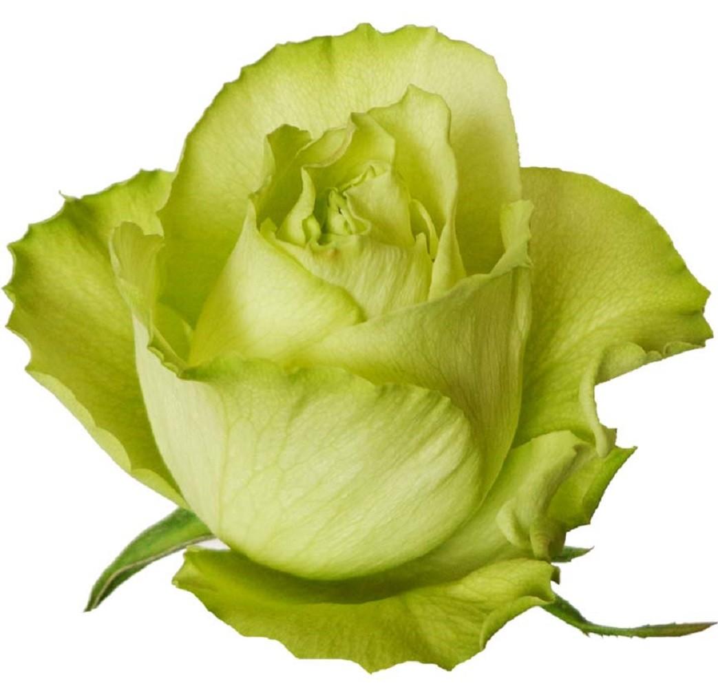 Foto 1 - Rosa Lemonade
