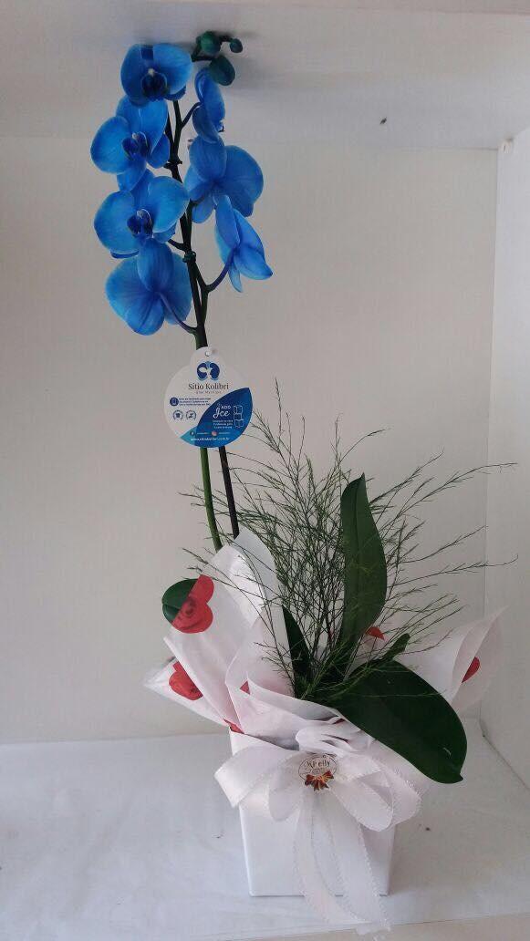 Imagem do produto Orquídeas