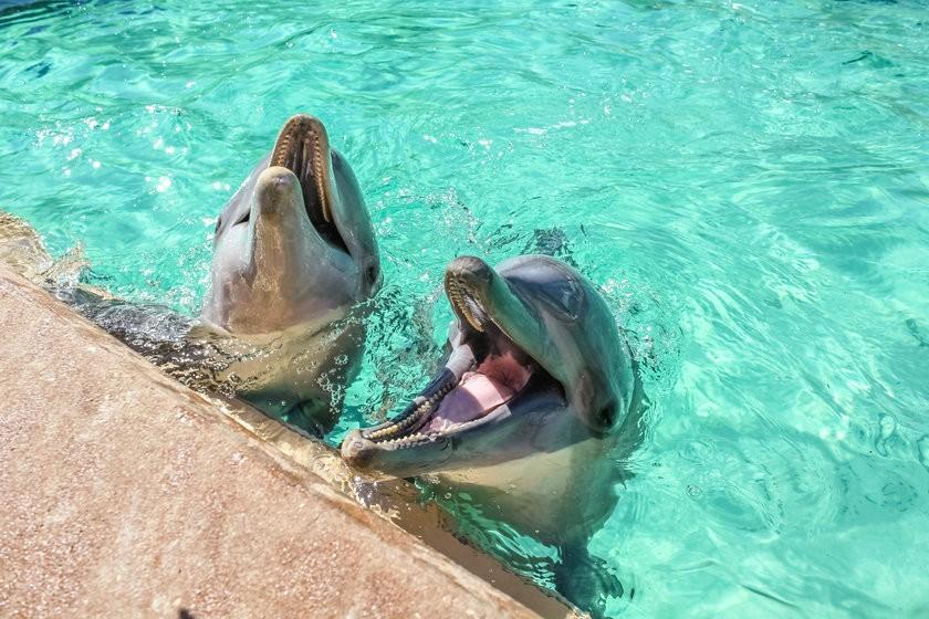 Foto 1 - Nado com golfinhos