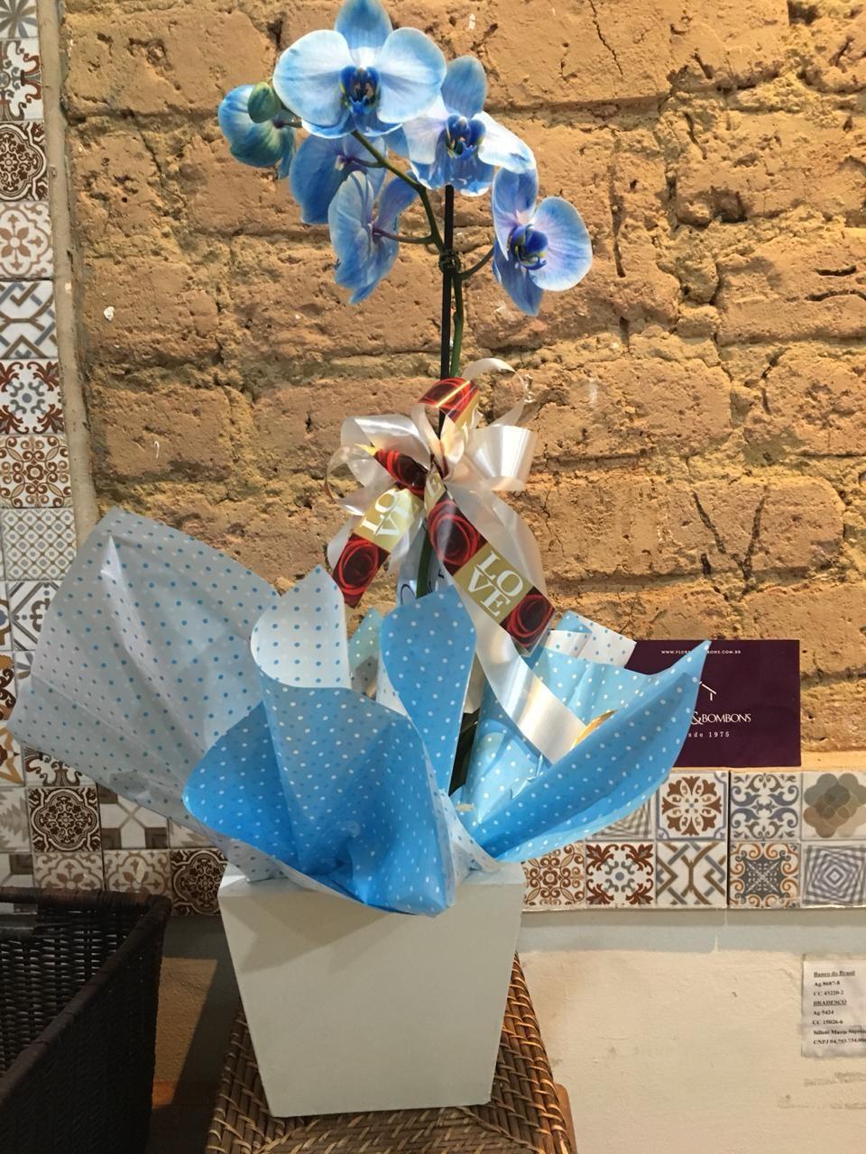 Foto 1 - Orquídea azul