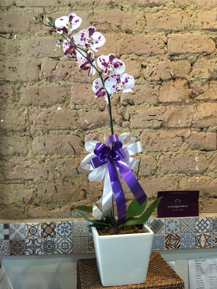 Foto 1 - Orquídea Phale