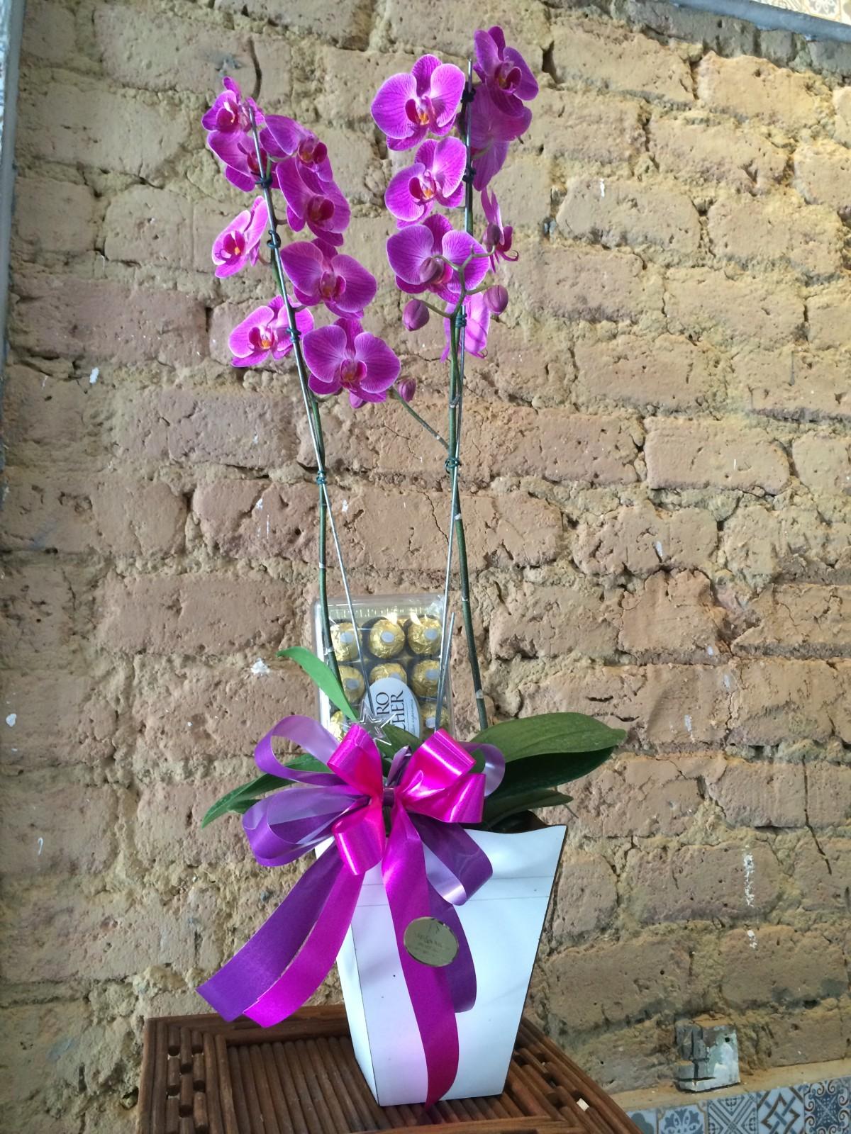 Foto 1 - Orquídea