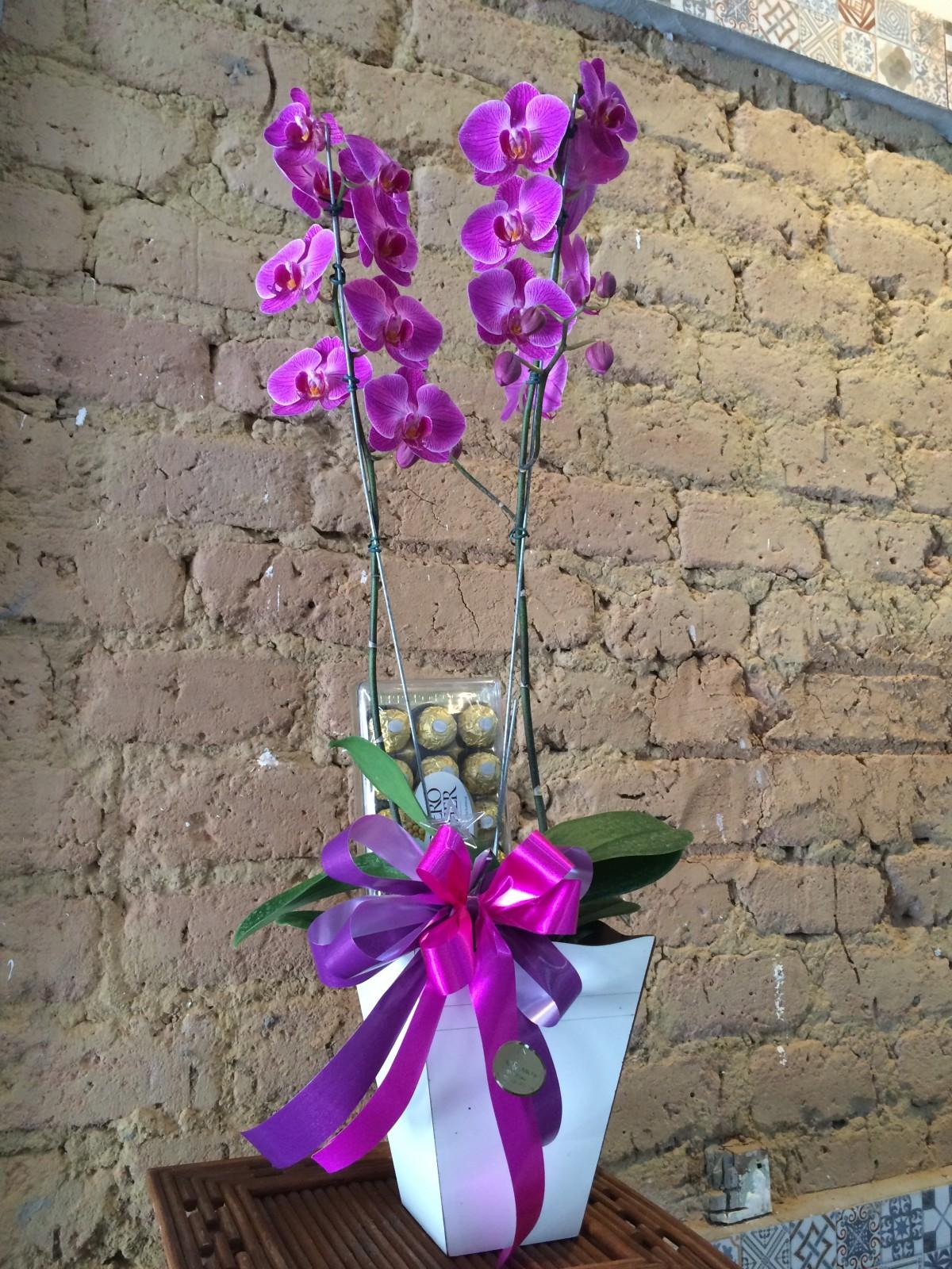 Foto2 - Orquídea