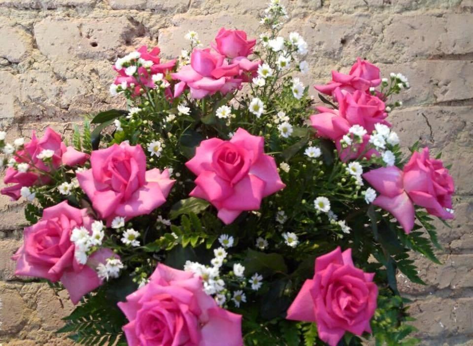Foto 1 - Rosas Pink