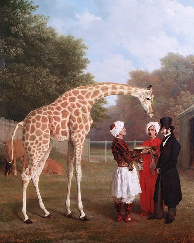 Foto 1 - A Girafa NúbiaAnimal Exótico Africano levada para Inglaterra Presente para o ReiGeorge IVPintura de Jacques-Laurent Agasse em TELA