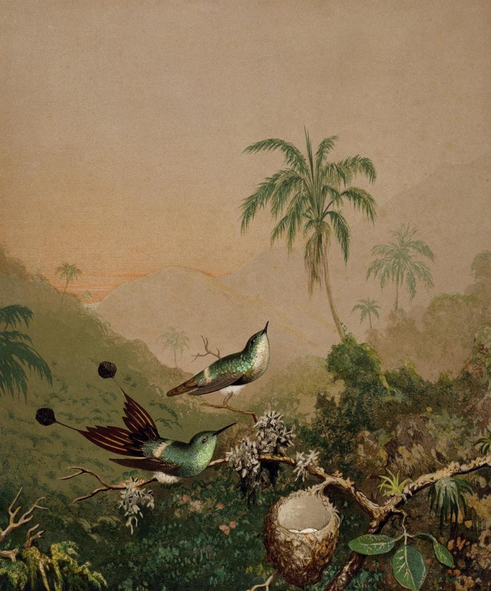 Foto 1 - Beija-flores Brasileiros Ninho com Ovos Pássaros Palmeiras e MontanhasFloresta Gemas do BrasilPintura de Martin Johnson Heade em TELA