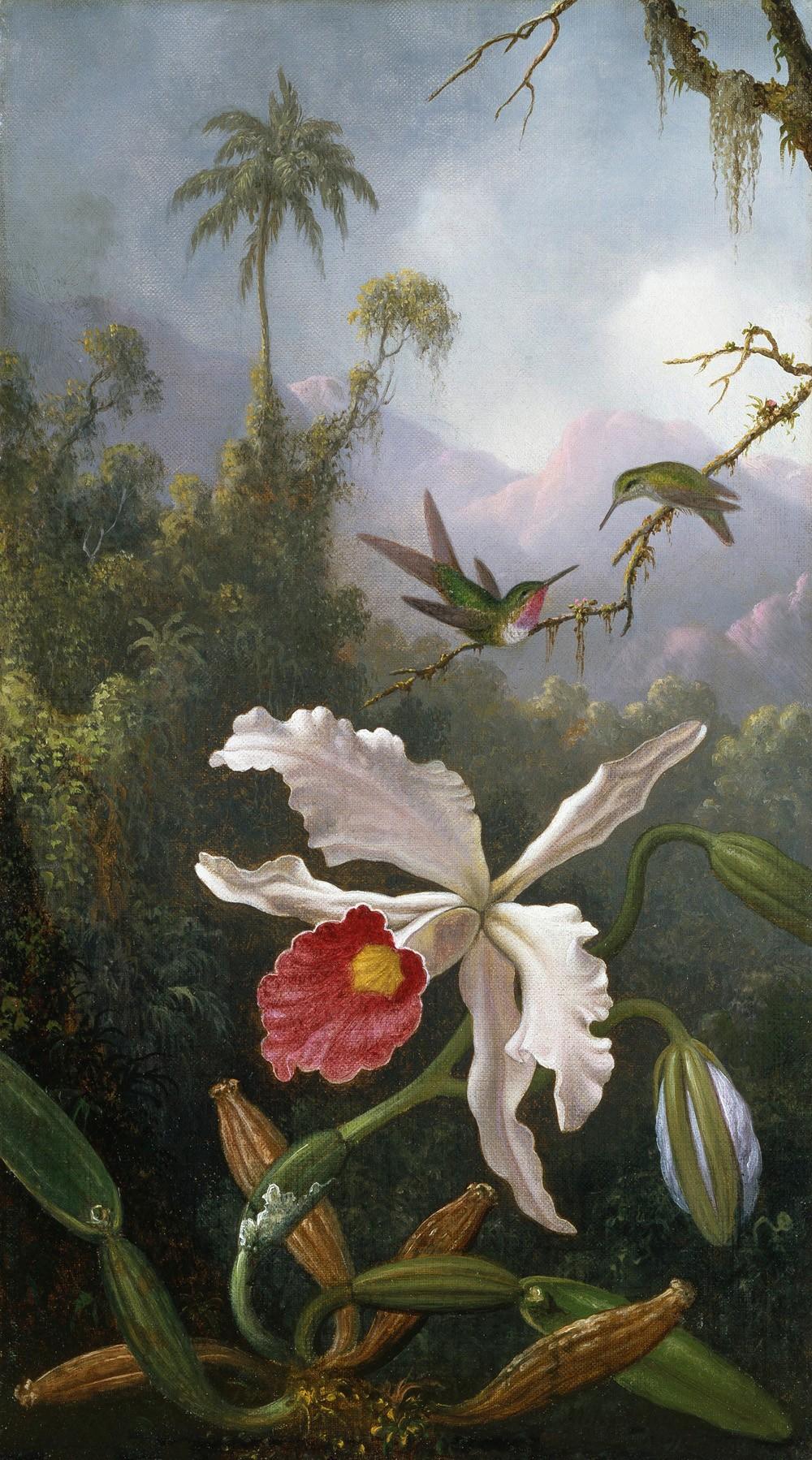 Foto 1 - Dois Beija-flores acima de uma Orquídea Branca Pássaros Flores Floresta Pintura de Martin Johnson Heade em TELA