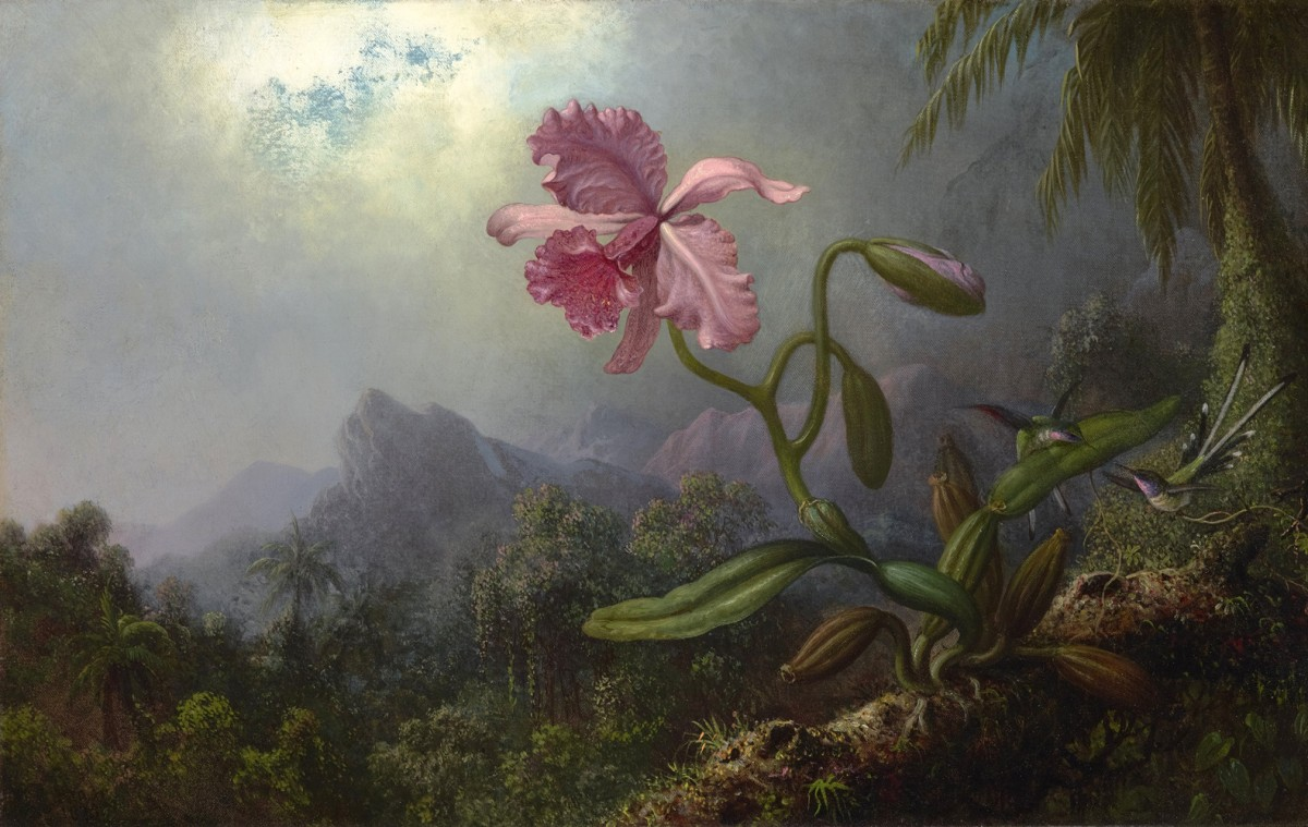 Foto 1 - Dois Beija-flores com uma Orquídea ColibriPássaro Flor FlorestaPintura de Martin Johnson Heade em TELA