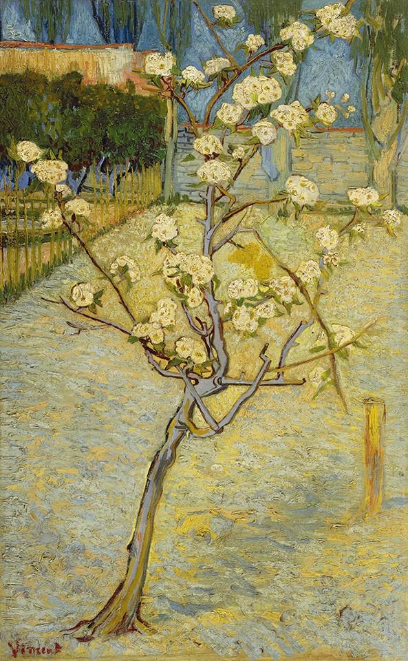 Foto 1 - Pequena Árvore de Pêra em Flor Pereira Primavera Pintura de Vincent van Gogh em TELA