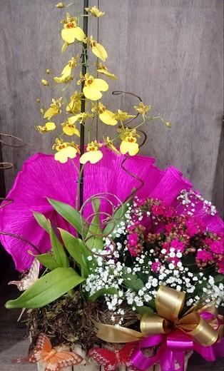 Foto 1 - Orquídea Chuva de Ouro